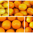 The oranges and lemons in the collage — Stock Photo