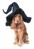 Dog sitting in a witches hat — Stock Photo