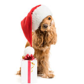 Dog in santa hat with gift — Stock Photo