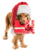 Dog in santa hat with a gift mouth — Stock Photo