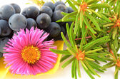 Still life of a flower, bunch of grapes, fragrant rosemary — Stock Photo