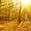 Forest.Mysterious autumn deciduous forest on a bright sunny day — Stock Photo