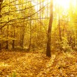 Forest.Mysterious autumn deciduous forest on a bright sunny day — Stock Photo #14087155
