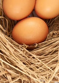 Eggs.Three brown chicken eggs in a straw nest — Stock Photo