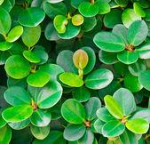 Fondo de hojas de color otoñal — Foto de Stock
