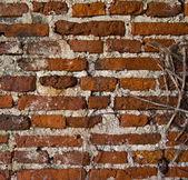 Old wall at thailand — Foto de Stock