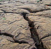 Dry earth texture at thailand — Stock Photo