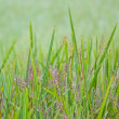 Colorful grass on water — Stock Photo