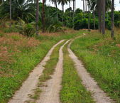 Country road through the fields — Foto Stock