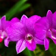 Beautiful Orchid. Photorealistic — Stock Photo