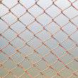 Barb wire fence — Stock Photo