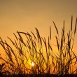 Beautiful morning sunrise with wheat grass in the foreground — Stock Photo