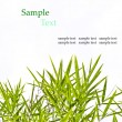 Bamboo leaves isolated on white background with sample text for — Stock Photo #34457743