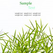 Bamboo leaves isolated on white background with sample text for — Stock Photo #34476089