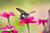 Flowers with butterflies — Stock Photo