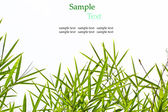 Bamboo leaves isolated on white background with sample text for — Photo