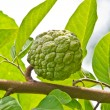 Custard apple fruit,Annona squamosa — Stock Photo