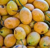 Exotic Thai Fruit. Maprang, Marian plum, Gandaria, Marian mango, — Stock Photo