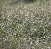 El rocío sobre la hierba — Foto de Stock