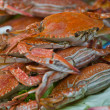 Horse Crab boil for eat — Stock Photo