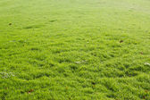 Peaceful Garden with a Freshly Mown Lawn — Stock Photo