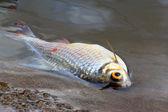 умер рыбы, вызванных загрязнением воды — Стоковое фото