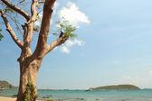 Rim beach tree — Stock Photo