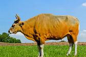Toro Banteng o rojo — Foto de Stock