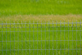 Metal fence on the grassland — Stock Photo