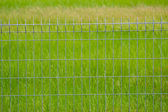 Metal fence on the grassland — Stock fotografie