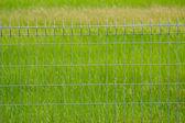 Valla metálica en la pradera — Foto de Stock
