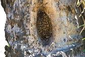 Cerrar la vista de las abejas trabajando en honeycells. — Foto de Stock