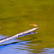 Stock Photo: Aquatic Plants and Dragonfly