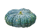 Green pumpkin fruit — 图库照片