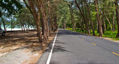 Road in the pine tree forest — Stock Photo
