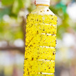 Insect trap in Green grapes on vine — Stock Photo