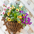 Stockfoto: Wall mounted hanging baskets with a range of summer flowers