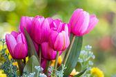 Pink tulip collage — Stock Photo