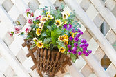 Wall mounted hanging baskets with a range of summer flowers — Stock Photo