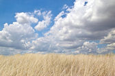 Meadow on hillside covered with grass. background — Foto de Stock