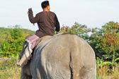 Elefante de asia — Foto de Stock