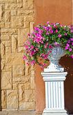 Roślin w dużym garnku ceramiczne na tle muru — Zdjęcie stockowe