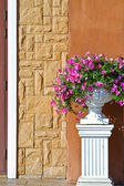 Plant in big ceramic pot on a background of wall — Stock Photo