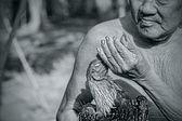 Fighting cock that Cholburi — Stock Photo