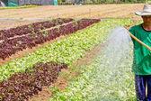 Man watering in organic vegetable garden — Photo