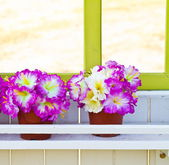Colorful artificial flowers made from cloth — Stock Photo