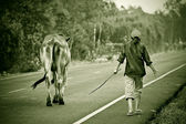 Way of life Countryside in thailand — Foto Stock