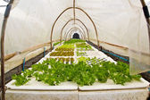 Organic vegetable farms for background. — Stock Photo