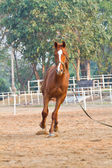 Horse riding in farm — Stockfoto