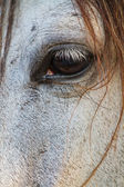 Horse eye close up in high key — Stock Photo